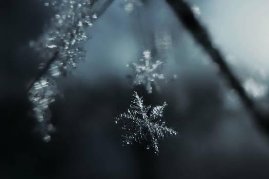 A snowflake