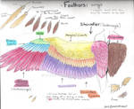 Feathers Tutorial 1: Wings