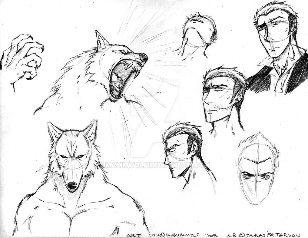 Ari Batchelder (Character Sketch) By MaximWolf On DeviantArt