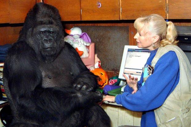Koko The Gorilla by dragonzero1980