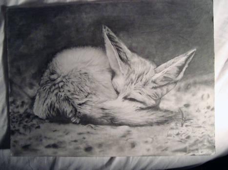 Fennec Fox Finished