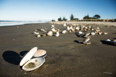 Waihi Beach Shell by DesignMH