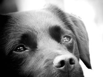 Black and white dog by Pireek