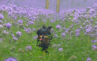 Dog Summer by Pireek