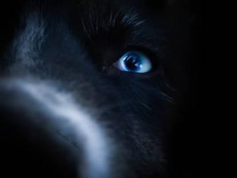 Reiko blue eyes by Pireek