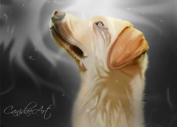 Labrador retriever by Pireek