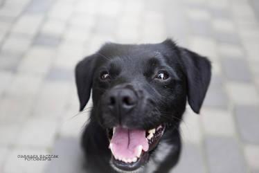 Smile Dog by Pireek
