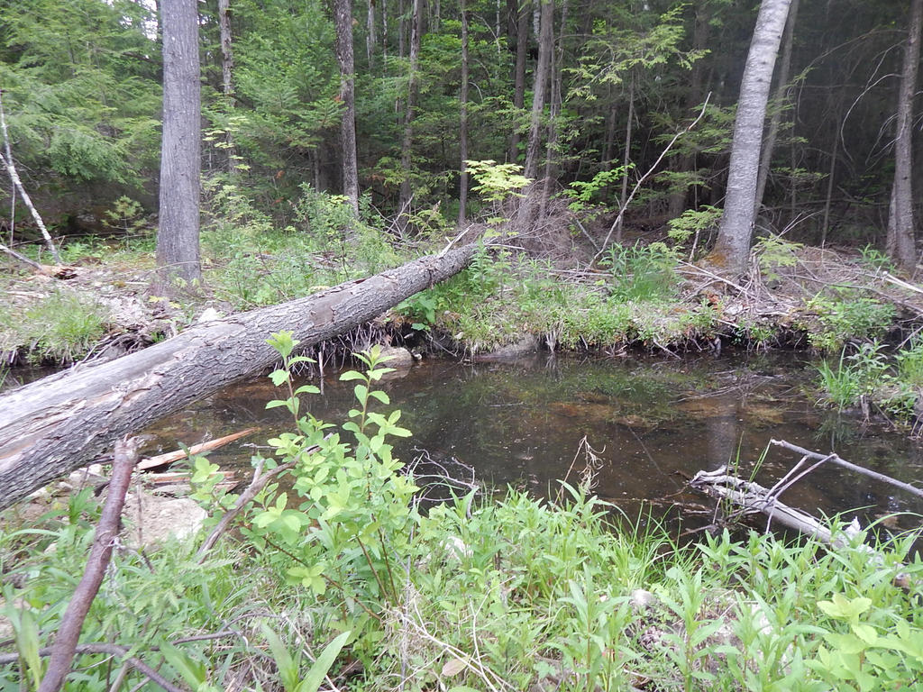 Creek by lXxLinkinxXl