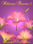 Hibiscus Flowers PNG Pack 2
