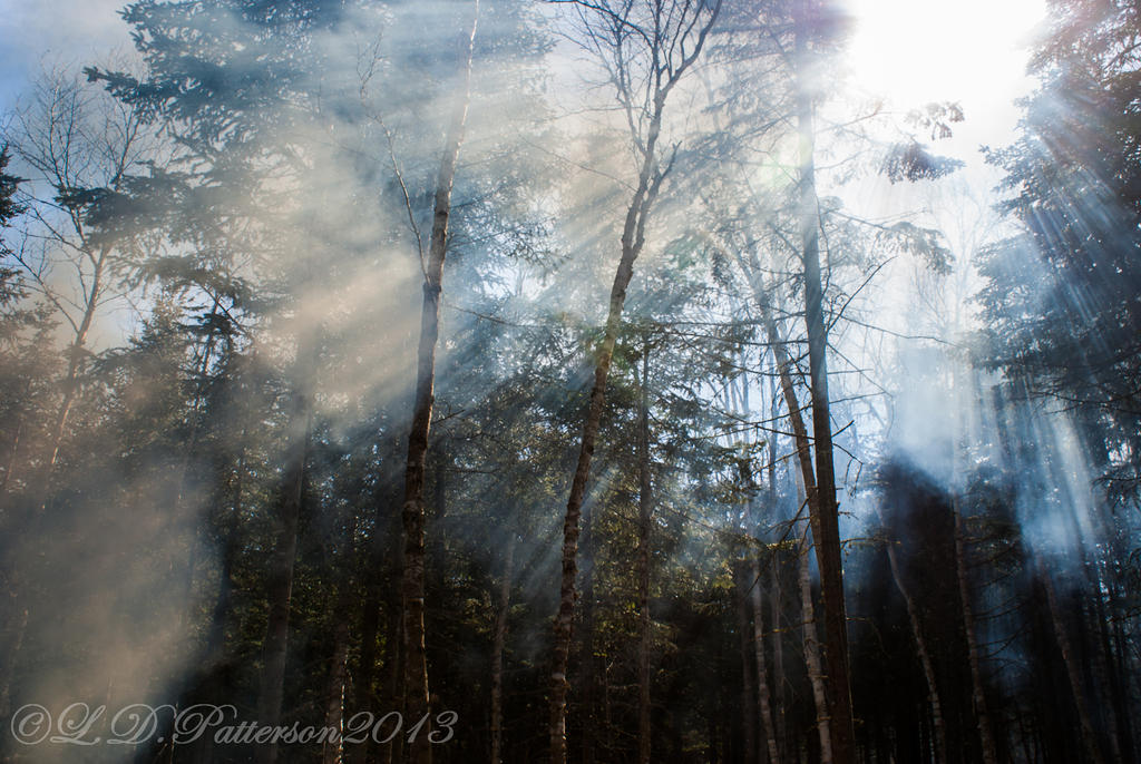 Smoke, trees, sun, sky by sillverrfoxx