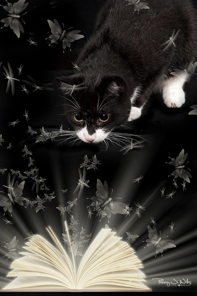 Book and butterflies