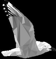 Black-billed Gull by War-Thrush