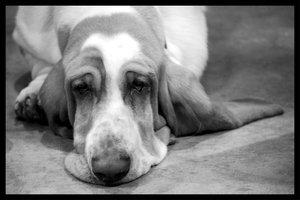Hound in the Low by AnimalPlanetClub
