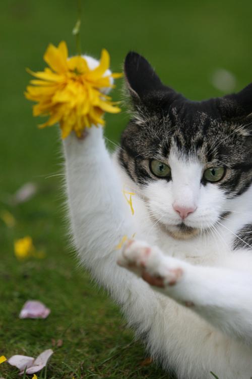 Kung fu Kitty by BlastOButter