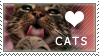 Love cats stamp by BlastOButter