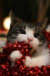 A taste of christmas by BlastOButter