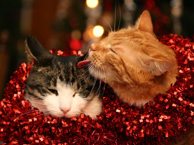 Christmas kiss by BlastOButter