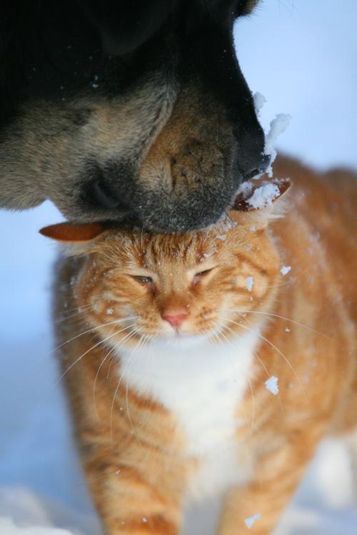 Snowy kiss by BlastOButter