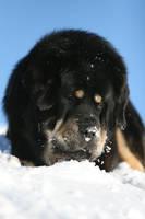 Snow Zodd