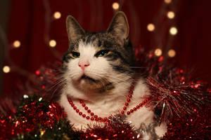 Christmas emperor by BlastOButter