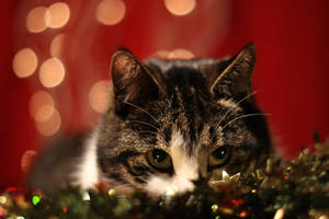 Sneaking up on Christmas