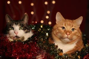 Merry Christmas by BlastOButter