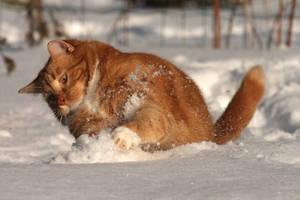 The ginger snowplow