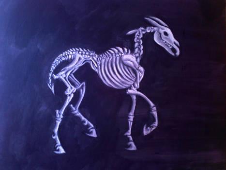 longma skeleton