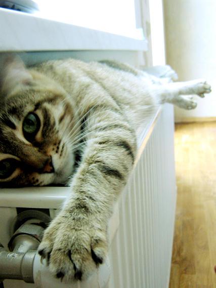 me cat by Tofan