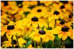 ...flowers...