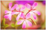 ...pink...