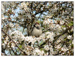 Sparrow Welcoming Spring