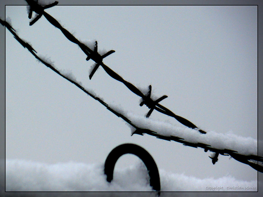 Barbwires and Snow - II