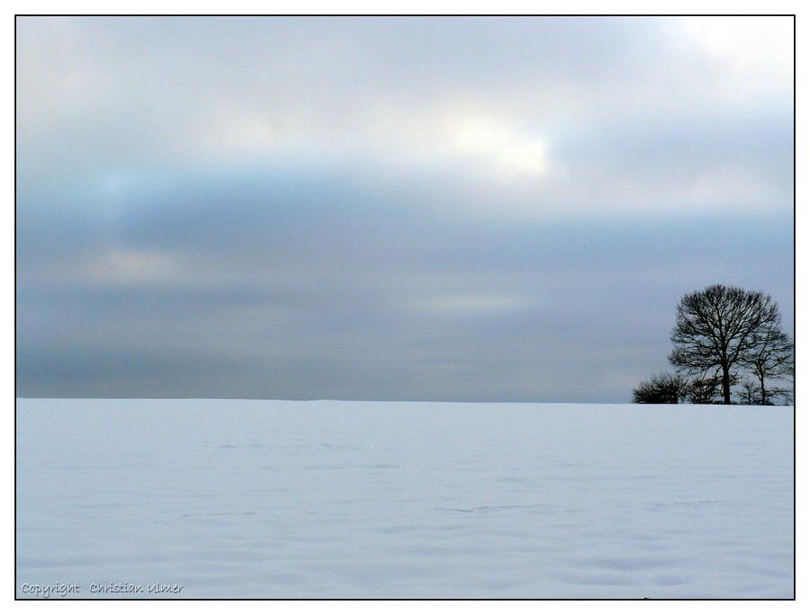 Snowy field - I