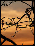 Twigs and sunset - I