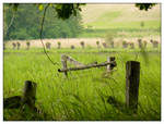Old rickety fences