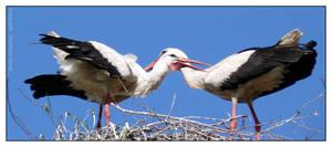 Stork Couple - I