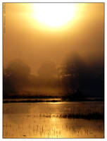 Golden sunrise - I