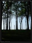Coastal Forest