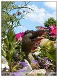 Breeding Duck - IV