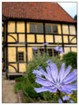 Cornflower and old houses - I