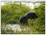 Exploring beaver - I