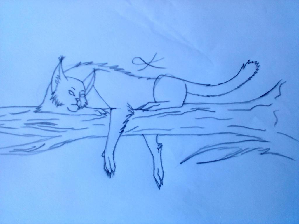 Lineart Cat by Kedra-PL