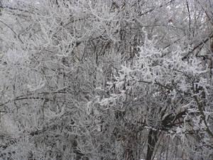 Bulgarian Winter