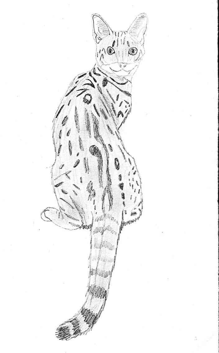 Savannah Cat by ~Bitten2007 on