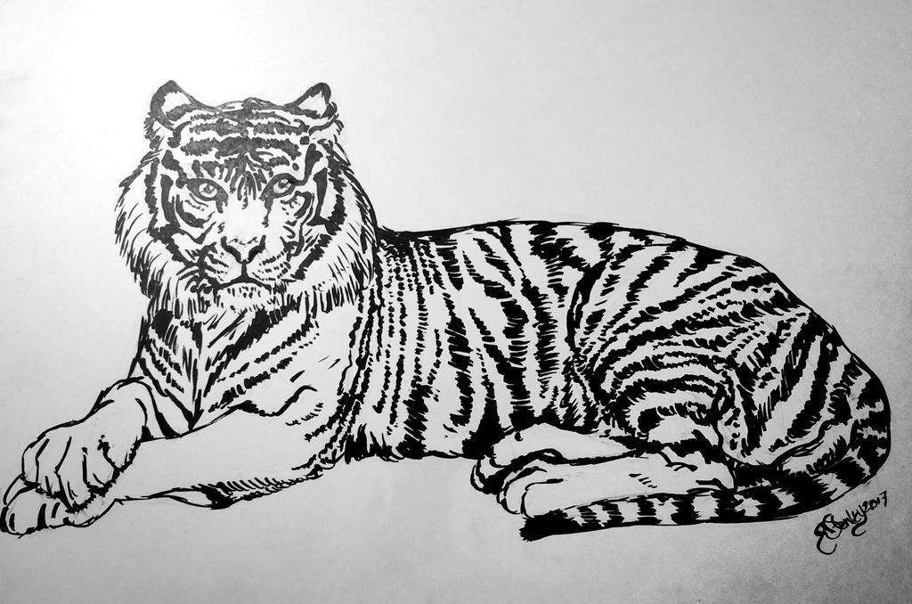tiger by kitschpainter