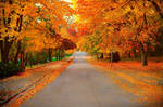 Our beautiful street... :)