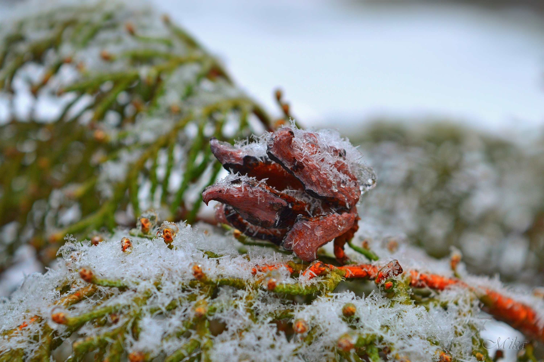 Snowy by MamaMika