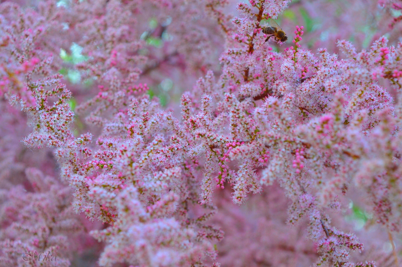 Spring-like... by MamaMika