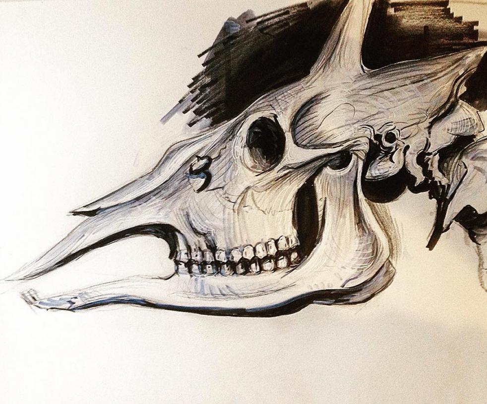 Horse Skull by hungerartist
